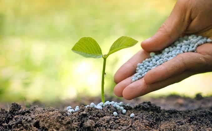 Gübreye Yüzde 125 Zam! Bu Yıl Meyve Sebze Pahalı Olacak…