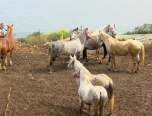 Bitmeyen Çile… Kayıp Atlarla İlgili Şaşırtan İddia