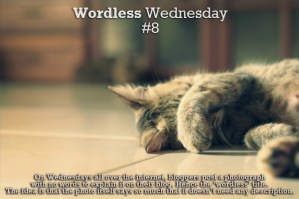 Wordless Wednesday #8