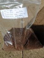 Eucalyptus regnans seeds