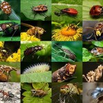 insectos-pictures