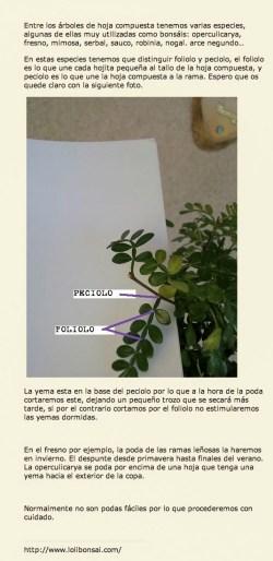 Poda de los árboles de hoja compuesta como objeto inteligente-1