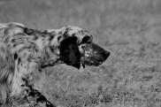 2015 04 18 cani 258 (Copia)