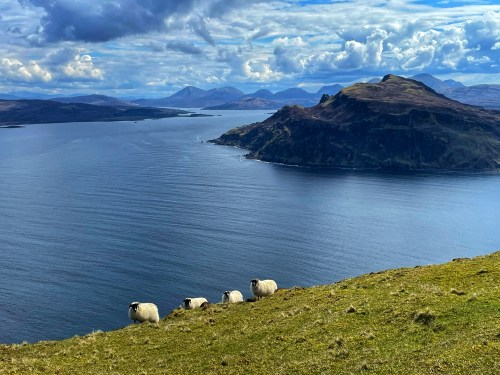 sheep on the skye trail