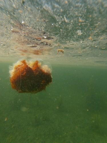 Jellyfish at stalker castle