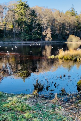 Duck pond in Forres