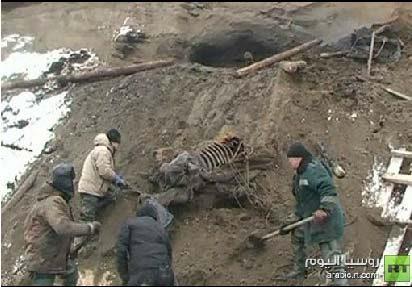 العثور على ماموث عمره 30 ألف عام في سيبيريا