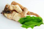 الجرجار : فجل حار Horseradish