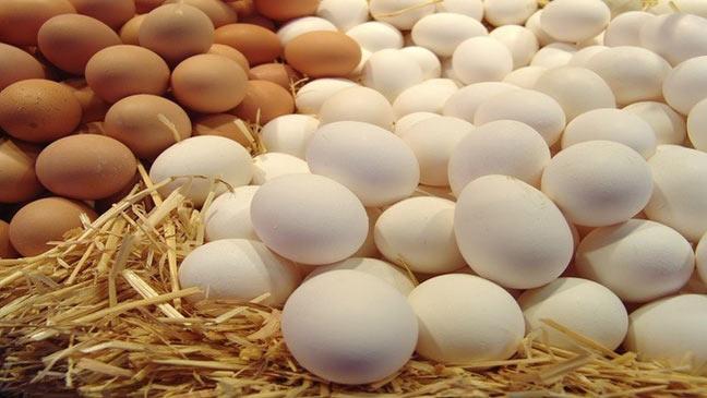بيض الدجاج يقي الرجال من السكري