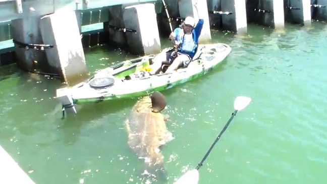 أمريكي يصطاد ذئبا بحريا بوزن 250 كيلوغراما