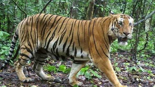 هل الأسر سيكون السبيل الوحيد للحفاظ على الحيوانات من الانقراض مستقبلا؟
