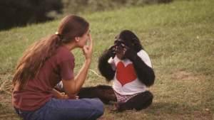 الإنسان والشمبانزي يتعرفان على الوجوه بنفس السرعة