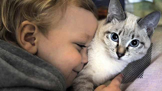 القطط تساعد في علاج المرضى