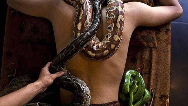 الثعابين تستخدم في المساج والعلاج