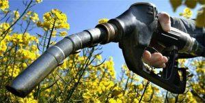 السيطرة على السليلوز...تشجع على الوقود الحيوي