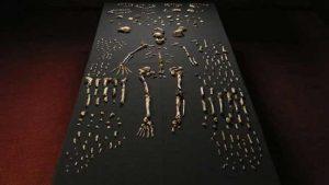 اكتشاف حفريات لنوع جديد من الجنس البشري في جنوب أفريقيا