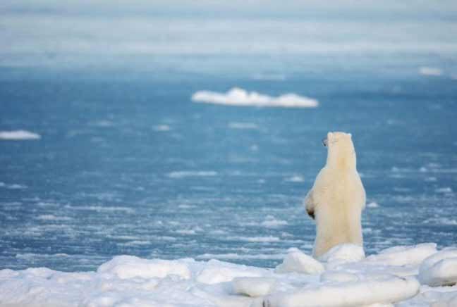استمرار ذوبان جليد القطب الشمالي