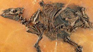 العثور على أقدم بقايا لحصان في رحم أمه عمرها 48 مليون عام