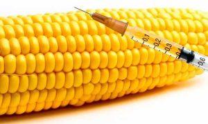 الأغذية المعدلة وراثياً وأخطارها الحقيقية