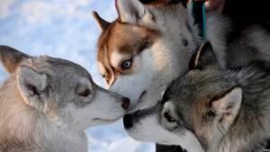 ماذا يمكن أن نتعلم من الكلاب؟