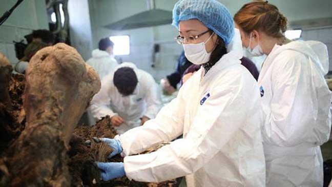 العثور على رفات جرو كلب عاش في سيبيريا منذ 12 ألف عام