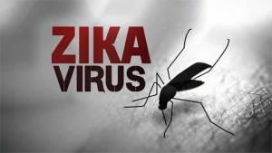العلماء يكتشفون علاقة بين فيروس زيكا وأمراض الدماغ