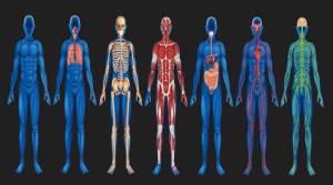 8 أعضاء في جسمك يمكنك العيش دونها.. ما هي؟