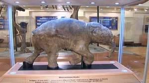 حيوان الماموث عملاق الجليد يعرض في كندا