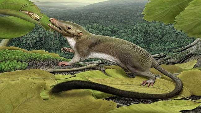 دراسة: الثدييات تكاثرت قبل انقراض الديناصورات