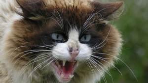 قط يحتجز أسرة كرهينة والأخيرة تستنجد بالطوارئ