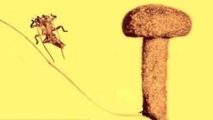 اكتشاف حشرة عمرها 50 مليون عام