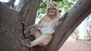 الكشف عن آلية ظهور الفصام ومرض التوحد لدى القرود