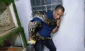 فيديو يحبس الأنفاس...ماذا فعل ثعبان اللوكو الضخم بصاحبه