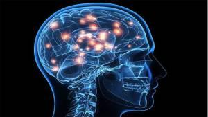 دراسة طبية تكتشف فارقا هاما في دماغ الأذكياء