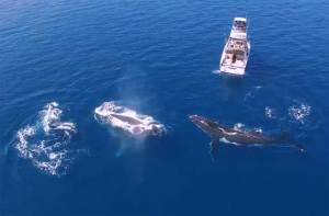 حيتان تحوم حول قارب في مشهد خاطف للأنفاس