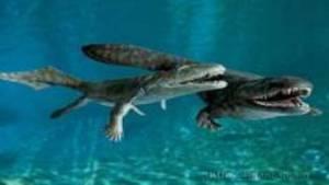 """صور سينية تكشف """"أول حيوانات ظهرت على كوكب الأرض"""""""