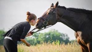 """علماء: الخيول تستطيع """"التكلم"""" بالحركة"""