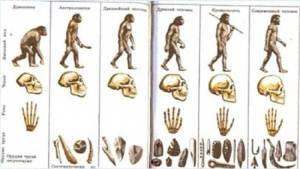 علماء يفندون نظرية داروين