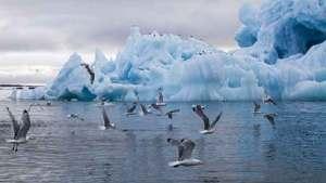 المناخ في القطب الشمالي يتغير أسرع بـ4 أضعاف متوسط تغيره على الأرض قاطبة