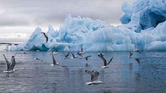 علماء: المناخ في القطب الشمالي يتغير أسرع بـ4 أضعاف متوسط تغيره على الأرض قاطبة
