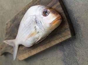 ما هي مظاهر الفساد في الأسماك