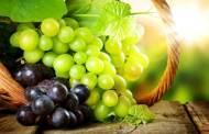 بذور العنب تدمر خلايا سرطان الدم