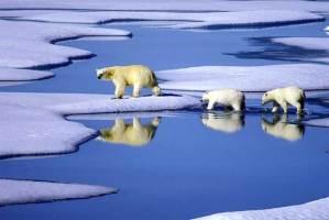 القطبين الشمالي والجنوبي يفقدون جليد بحجم الهند