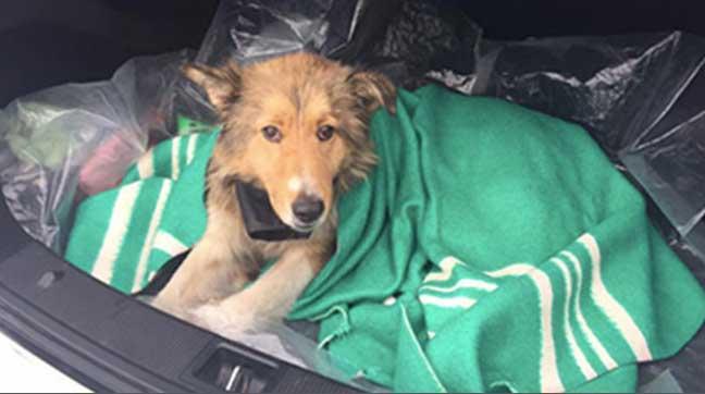 كلب يمضي يومين على سكة القطارات لإنقاذ صديقه المصاب