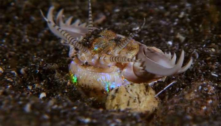 ديدان عملاقة تغزو قاع المحيطات