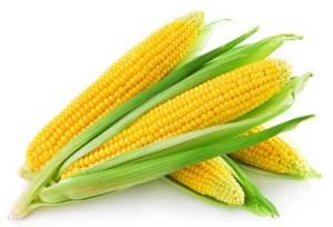 خبراء يحذرون من اختفاء الذرة