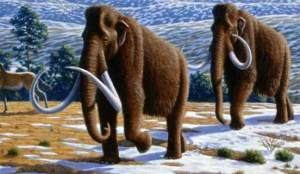 علماء يحددون أسباب انقراض الحيوانات العملاقة القديمة