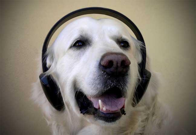 ما هي الموسيقى التي تحبها الكلاب؟