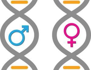 اكتشاف 6500 اختلاف جيني بين الرجل والمرأة