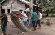 """معركة """"حياة أو موت"""" بين إندونيسي وثعبان عملاق"""